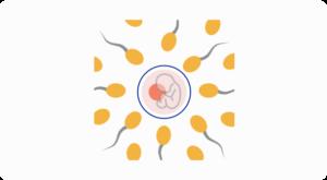 Reproductive Medicine